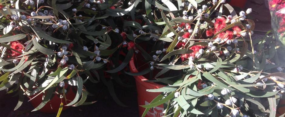 Sant feliu de guixols in november - christmas in Girona