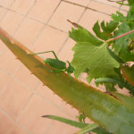 Insect on patio!