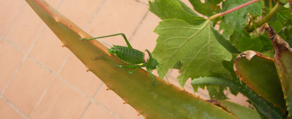 Insect on the patio of our vacation rental on the Costa Brava!