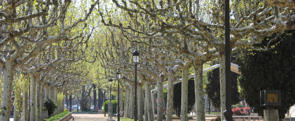 The passeig trees