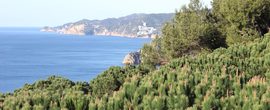 View from the solarium at maremar