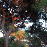Sant feliu de guixols in november - sunset